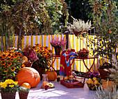 Herbstbalkon mit Rudbeckia hirta 'Autumn Colors', Calluna vulgaris 'Amethyst' +