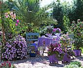 Holzcontainer: Petunia conchita 'Strawberry frost', Podranea