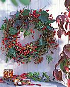 Rosa / Hagebutten, Vitis / Weinranken, Euonymus / Pfaffenhütchen, Parthenocissus