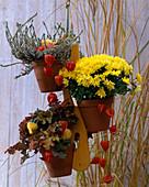 Topfaufhänger aus Holz: Calluna 'Alicia' / Heide, Chrysanthemum 'Yahou Lemon', H