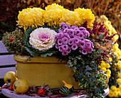 Chrysanthemum / Chrysanthemen, Brassica / Zierkohl, Hedera / Efeu, Thymus citri