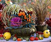 Capsicum / Zierpaprika, Brassica / Zierkohl, Carex 'Evergold'/ Buntsegge, Carex te