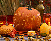 Decoration with carved pumpkins. Cucurbita pepo (pumpkin)