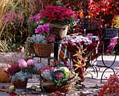 Chrysanthemum, Calocephalus / Stacheldraht, Brassica / Zierkohl, Erica u. Calluna