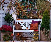 Chrysanthemum 'Dreamstar', Prunus laurocerasus (Kirschlorbeer), Cupressus 'Goldc