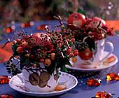 Malus / Äpfel und Zieräpfel, Hedera / Efeu, Myrtus / Myrte, Hypericum / Johanniskraut