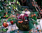 Metallkorb mit Moos, Malus / Äpfel und Zieräpfel, Rosa / Rose 'Esperance', Chrysant