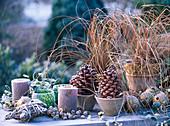 Rauhreif auf Pinus pinea (Pinienzapfen), Carex testacea (Herbstsegge)