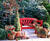 Weihnachtsterrasse: Corylus avellana 'Contorta' / Korkenzieherhasel, Picea glauc