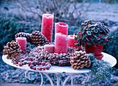 Terrassendeko mit Rauhreif: Gaultheria 'Winter Pearls' / Scheinbeere, Pinus pine