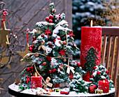 Abies procera / Nobilistanne,gebundenes Bäumchen, weihnachtlich geschmückt