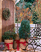 Pflanzen auf dem Balkon überwintern: Töpfe mit Kokosmatte einpacken und auf Styr