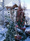 Vogelfutterhaus, Cornus alba / Hartriegel mit Malus / Äpfeln, Picea