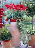 Tulipa 'Red Parrot' / Papageientulpen, Euphorbia 'Elektra' / Wolfsmilch