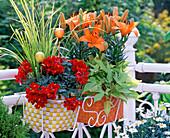 Lilium / Asiatische Lilie, Anthirrhinum / Löwenmäulchen, Acorus
