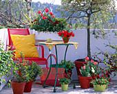 Tulipa / Tulpen, Bellis / Tausendschön, Euphorbia / Wolfsmilch,