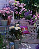 Rosa 'Ambiente', 'Bonica' / Rosen, Lavandula 'Munstead'