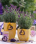 Lavandula 'Dwarf Blue' / Lavendel in gelben Töpfen, Lavendelherzen