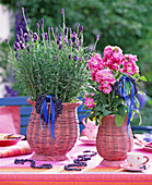 Lavandula 'Hidcote Blue' / Lavendel, Matthiola / Levkoje in rosa