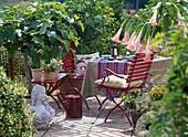 Ficus carica / Feige, Datura (Brugmansia) 'Pink Favourite'/ Engels-