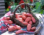 Solanum tuberosum 'Franceline'