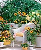 Helianthus / Sonnenblumen, Rudbeckia / Sonnenhut
