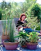 Wasserpflanzenbalkon anlegen: Fertiger Balkon mit 10/10