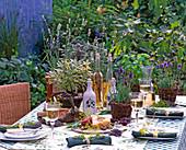 Mediterranean, Lavandula (Lavender), Salvia (Sage)