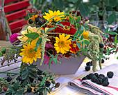 Helianthus 'Capenoch Star' / Sonnenblumen, Zinnia / Zinnien