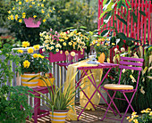 Dahlia / Dahlie, Argyranthemum 'Primrose Petit'/ Margeriten