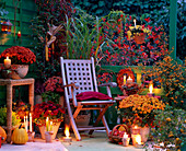 Chrysanthemum 'Rhodos' - 'Tictac' - 'Luron' - 'Tipo' (Chrysanthemen), Miscanthus