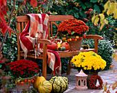 Chrysanthemum 'Rhodos' - 'Tictac' - 'Dia' (Chrysanthemen), Physalis (Lampions),