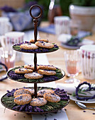 Metalletagere mit Lavandula / Lavendel