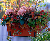 Chrysanthemum / Deko-Chrysanthemen, Fragaria / Erdbeeren, Capsicum / Zierpaprika