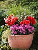 Vorher-Nachher-Beetauffrischung: Fertig bepflanzt mit Aster / Astern, Dahlia