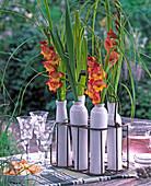 Gladiolus / Gladiolen, Spartina / Goldleistengras in