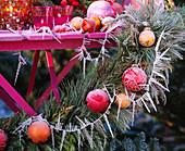 Pinus / Kiefernzweige, Cryptomeria / Sicheltanne