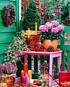 Balkonecke mit Buchbaum, Chrysanthemen, Efeu, Heide