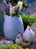Hyacinthus (weiße und blaue Hyazinthen)
