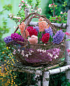 Korb mit Hyacinthus 'Gipsy Queen' - 'Jan Bos' - 'Apricot Passion'