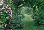 Rasenweg unter Laubengang mit Wisteria (Blauregen), Clematis (Waldrebe), Geranium (Storchschnabel)