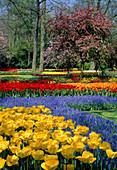 Garten IM Frühling Keukenhof