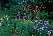 Aster amellus (Bergaster), Verbena bonariensis (Eisenkraut), Lilium tigridum (Tigerlilien), Rudbeckia (Sonnenhut) und Argyranthemum (Margeriten)