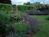 Beete mit Rosa (Rosen) und Geranium (Storchschnabel), Nepeta (Katzenminze) als Einfassung, Hecke aus Prunus laurocerasus (Kirschlorbeer), gemauerte Pfosten und Gartentor