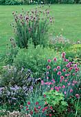 Kleines Kräuterbeet : Schopflavendel (Lavandula stoechas), Eberraute (Artemisia abrotanum), Rosmarin (Rosmarinus), Schnittlauch (Allium schoenoprasum) und Dianthus caesius (Nelken)