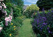 Rasenweg zwischen Beeten mit Anchusa (Ochsenzunge), Hemerocallis (Taglilien), Geranium (Storchschnabel), Rosa (Rosen), Blick auf Wand mit Kletterrosen