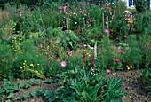 Bauerngarten mit Zucchini (Cucurbita), Gurken (Cucumis), Cosmos (Schmuckkörbchen), Lupinus (Lupine), Calendula (Ringelblumen), Zinnia (Zinnien), Tomaten (Lycopersicon), Helianthus (Sonnenblume), Frau schneidet Blüten
