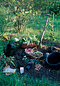 Beet anlegen : Stauden, Zwiebeln und Gehölze pflanzen, Grabgabel, Giesskanne, Eimer, Handschuhe