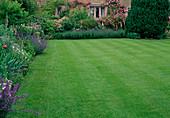 Rasenfläche, Beete mit Nepeta (Katzenminze), Lavandula (Lavendel), Rosa (Kletterrosen) an Hauswand