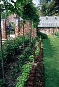 Langes Beet mit Acer platanoides (Ahorn), Hochstaemme , Reihen mit bunten Salaten (Lactuca), Buxus (Buchs) und Rosa (Rosen), Rasenweg, offenes Gartentor in Backsteinmauer, hinten Gewächshaus